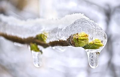 Descongelar