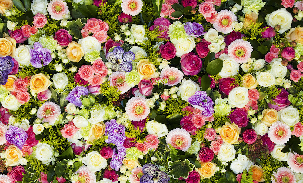 flores y signos