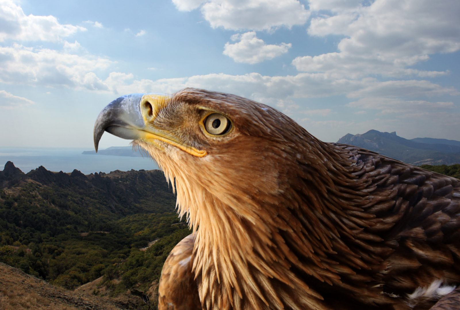 características de la ornitomancia