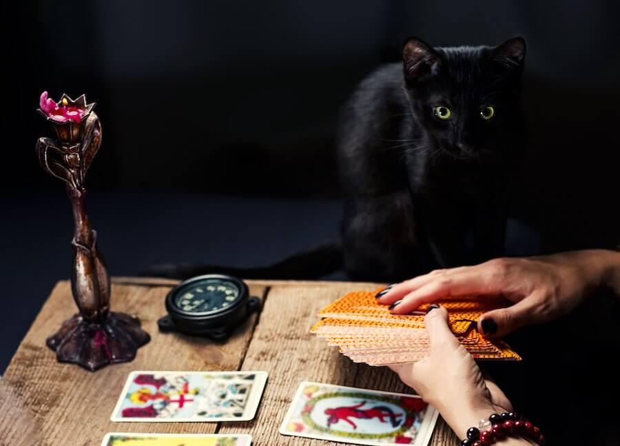 el tarot y los animales