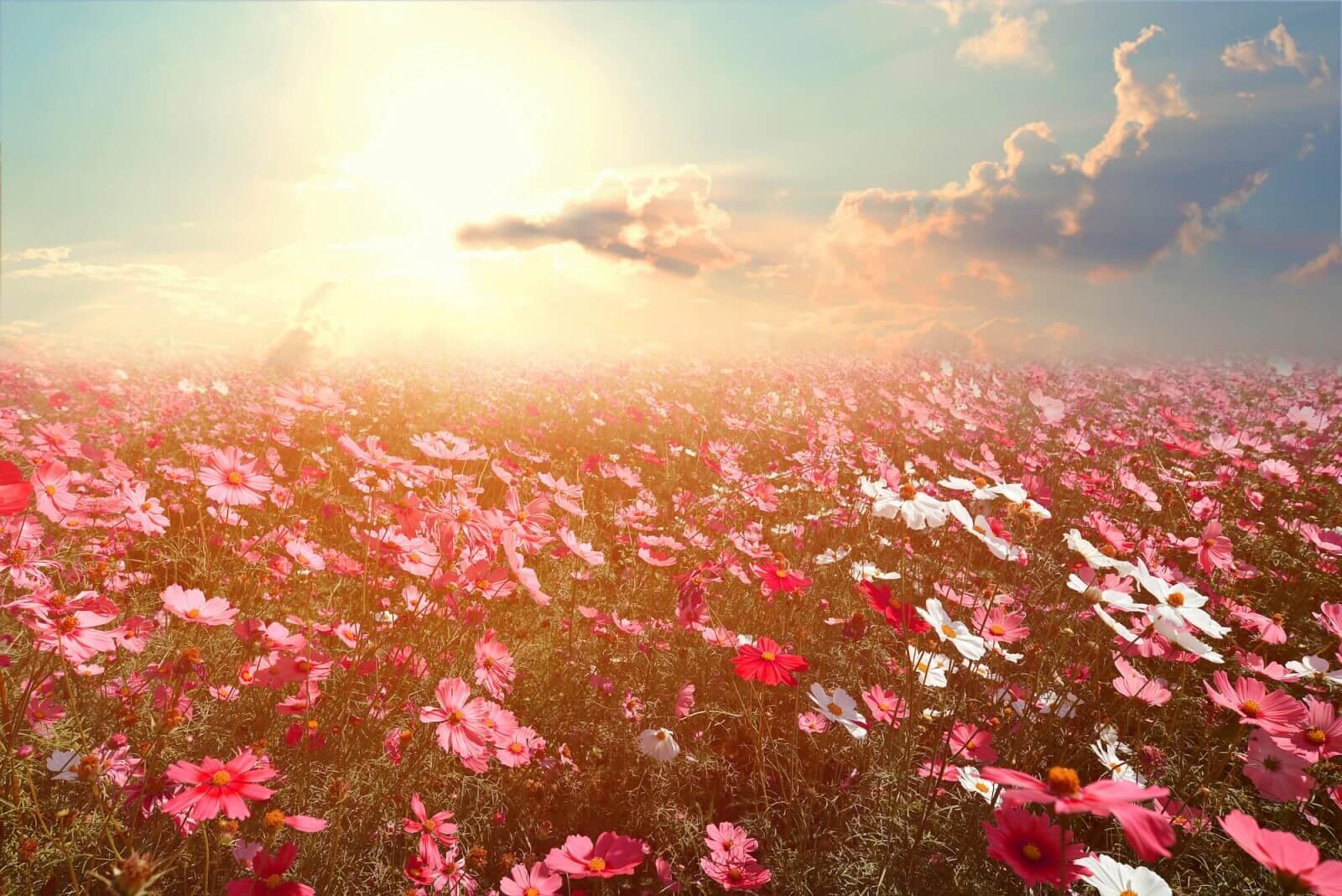 Árboles y flores según tu signo I