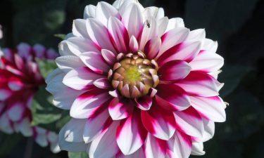 Árboles y flores según tu signo II