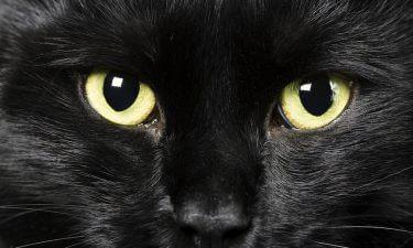 Gato Negro: ¿Buena o mala suerte?