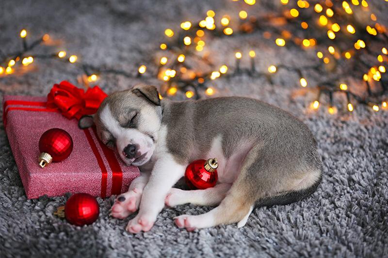 Los sueños navideños y su verdadero significado