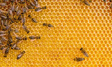 Apiterapia : la curación de las abejas