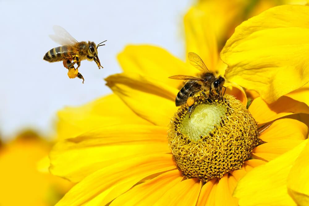 Apiterapia: el poder curativo de las abejas