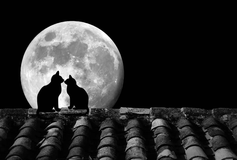Todo sobre la Luna Llena