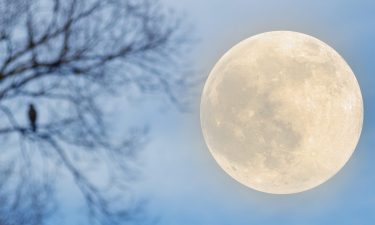 La Luna en Nuestro Signo