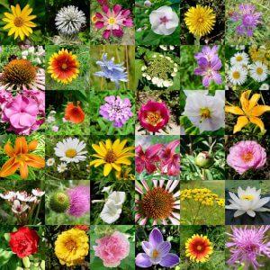 La función de las flores en el horóscopo