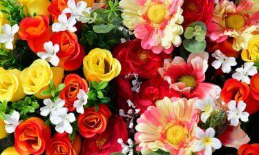 El horóscopo y sus respectivas flores