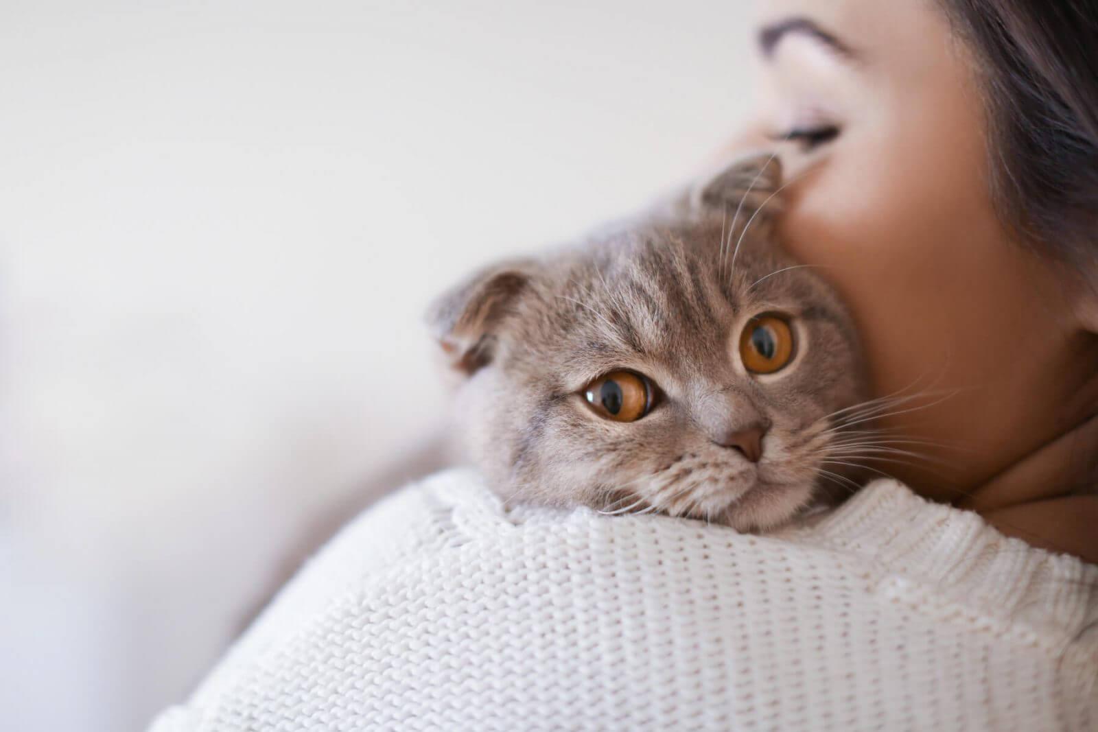 los gatos y su legado espiritual