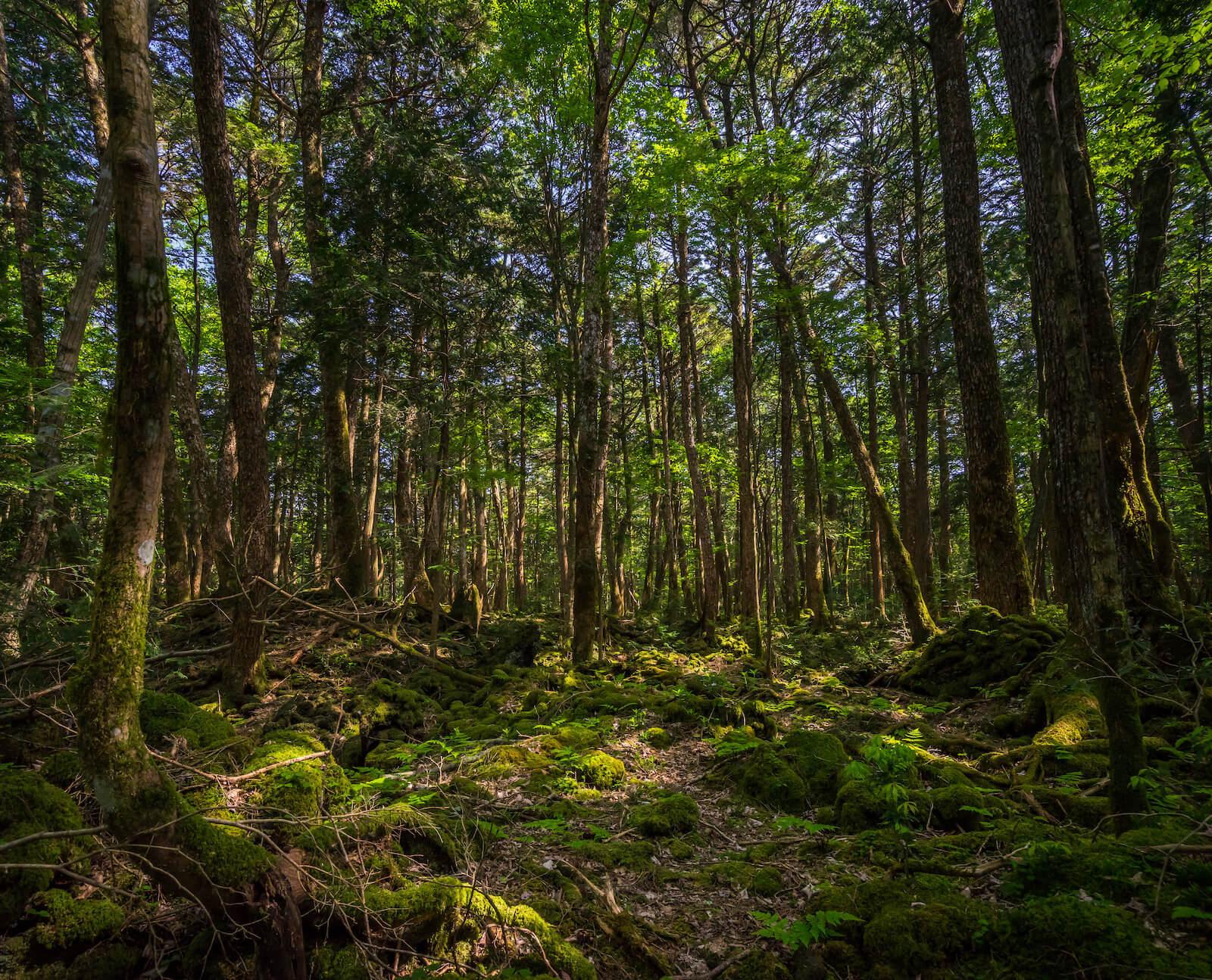 aokigahara bosque maldito