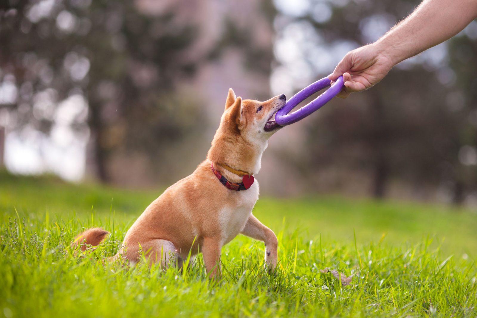 pasear mascotas