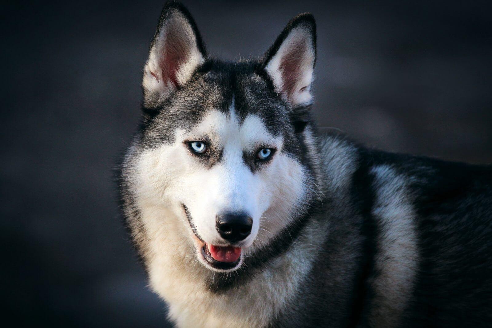 preciosas mascotas