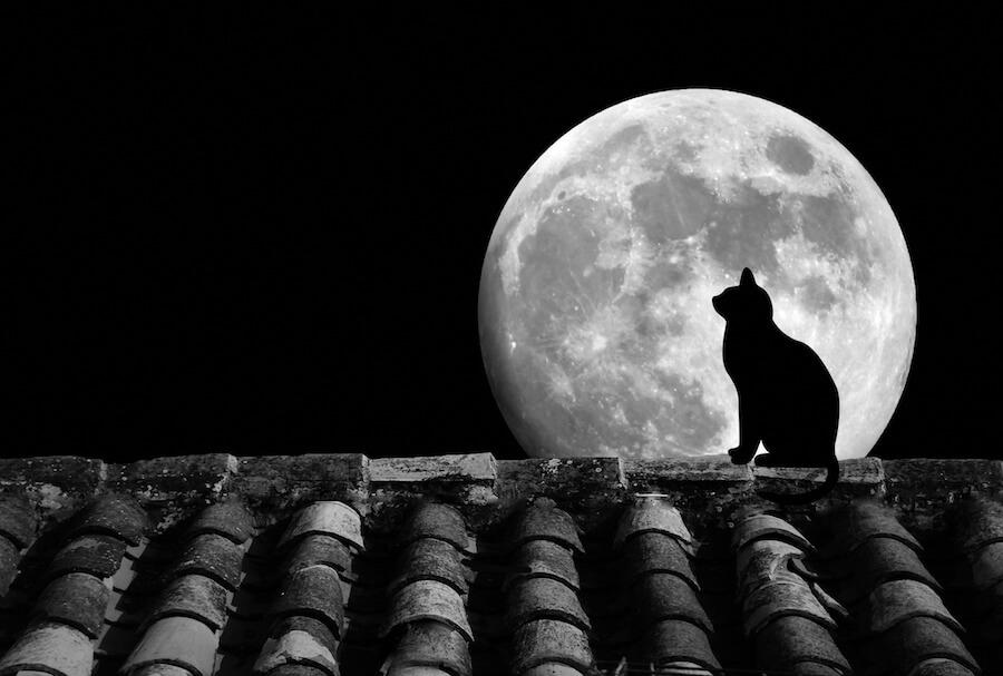 primera luna llena del año
